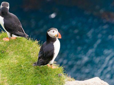 In search of puffins in Mykines, Faroe Islands