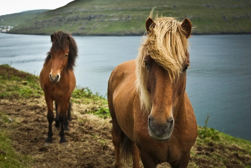 things to do in the Faroe Islands horse riding