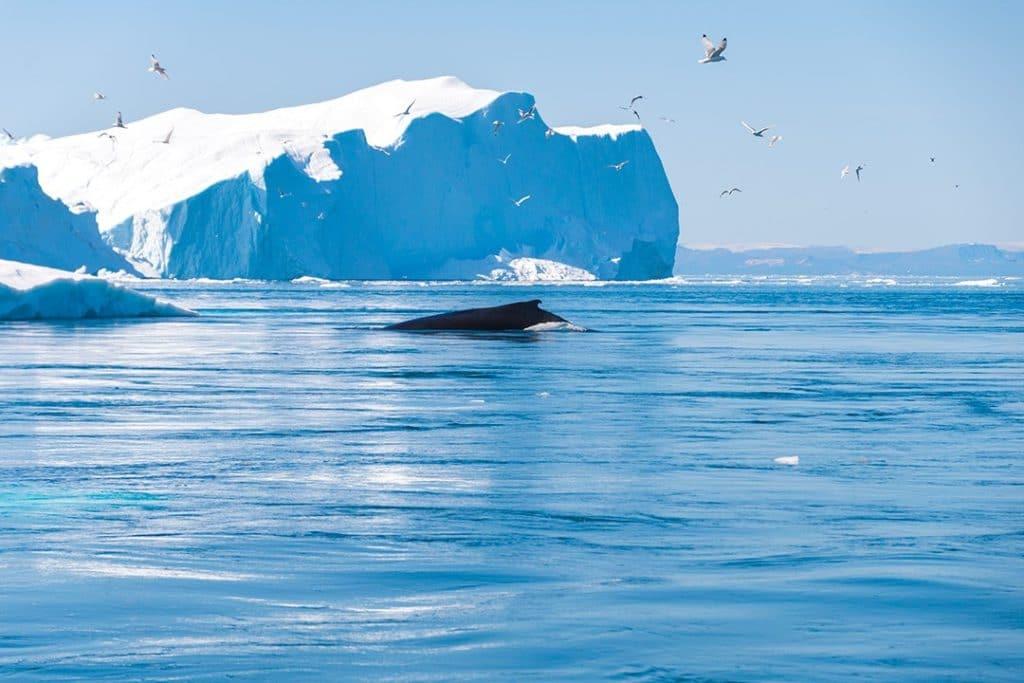 8 лучших занятий в Илулиссате, Гренландия 8 лучших занятий в Илулиссате, Гренландия Hiking around Ilulissat Sermermiut 13 1024x683