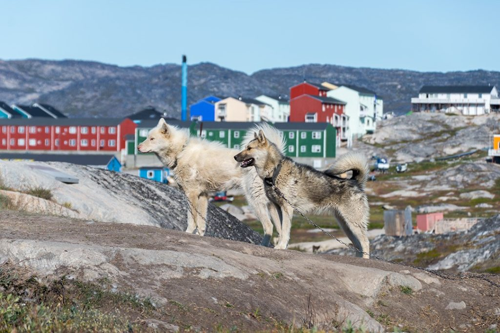 hiking around ilulissat two huskies
