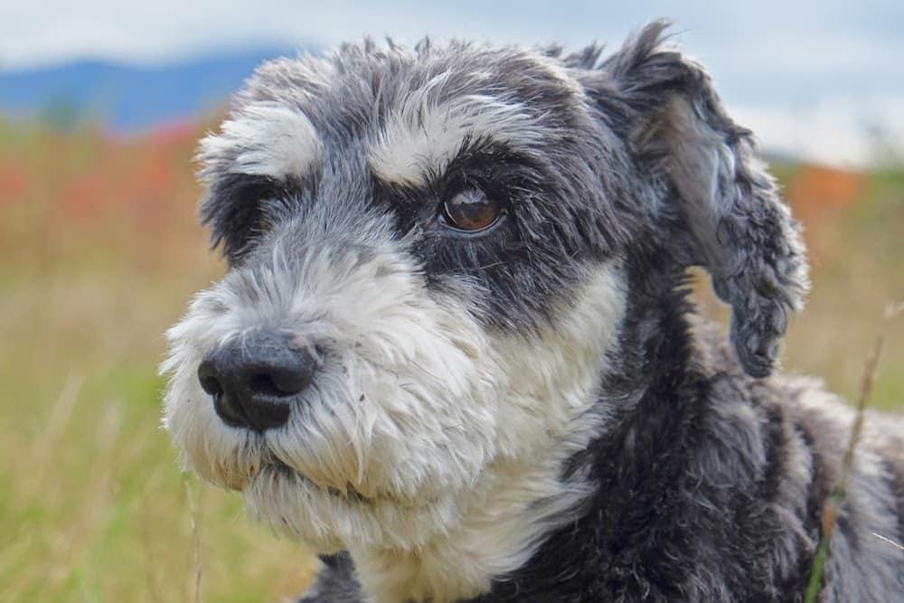 Atticus the dog