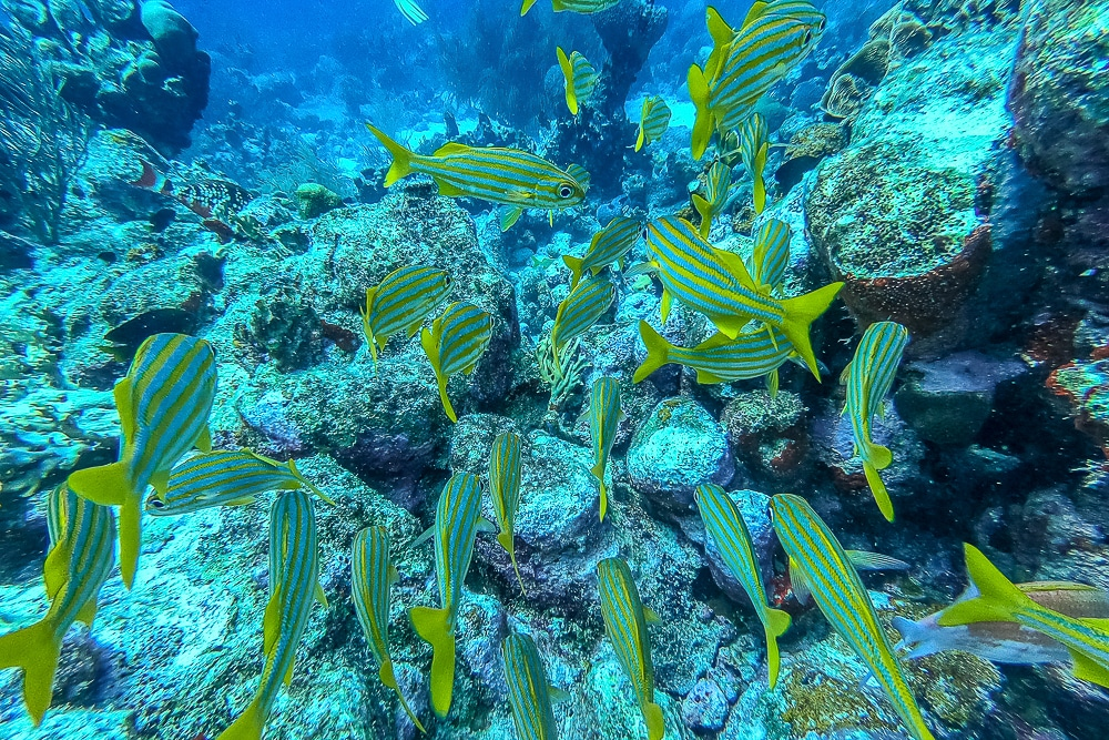 Garden reef our second dive after the Sonesta plane wrecks in Aruba