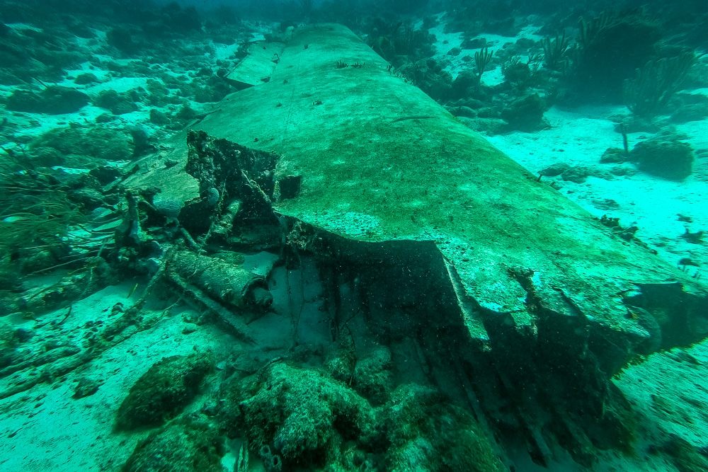 The wing of one of the planes seen while diving the Sonesta plane wrecks in Aruba