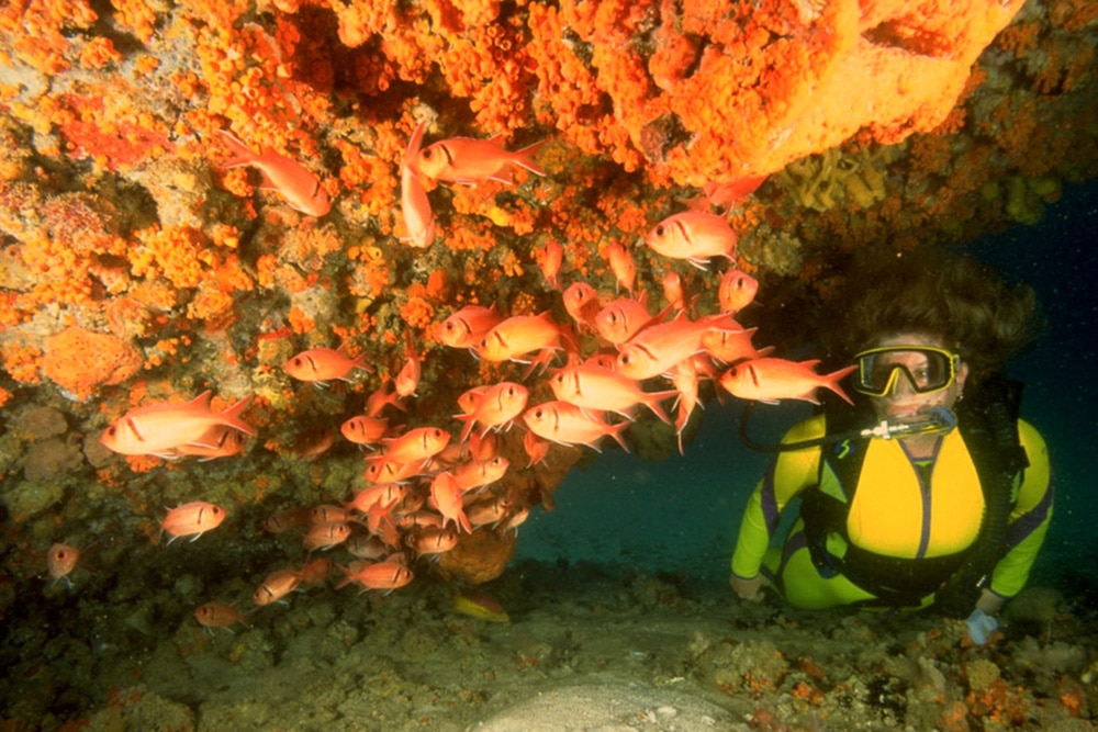 An image reportedly taken at Serito Pinnacle, one of the best dive sites in Aruba