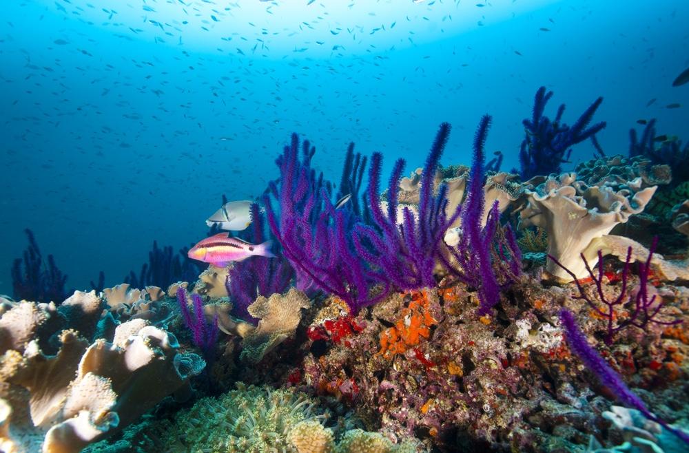 things to do in oman diving