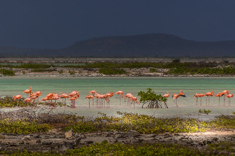 Spotting flamingoes is one of the best things to do in Bonaire