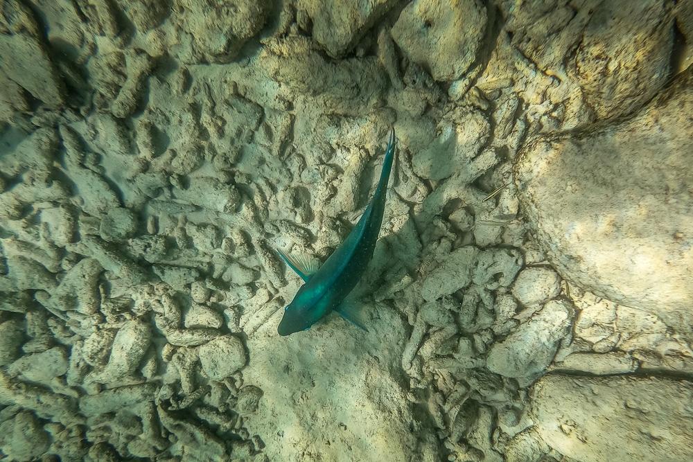Чем заняться в Бонайре Чем заняться в Бонайре Bonaire snorkelling 9