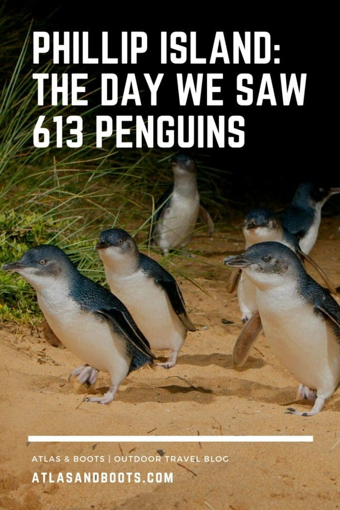 Phillip Island Penguin Parade pinterest