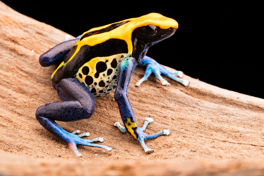 a frog in brazil, one of the world's megadiverse countries