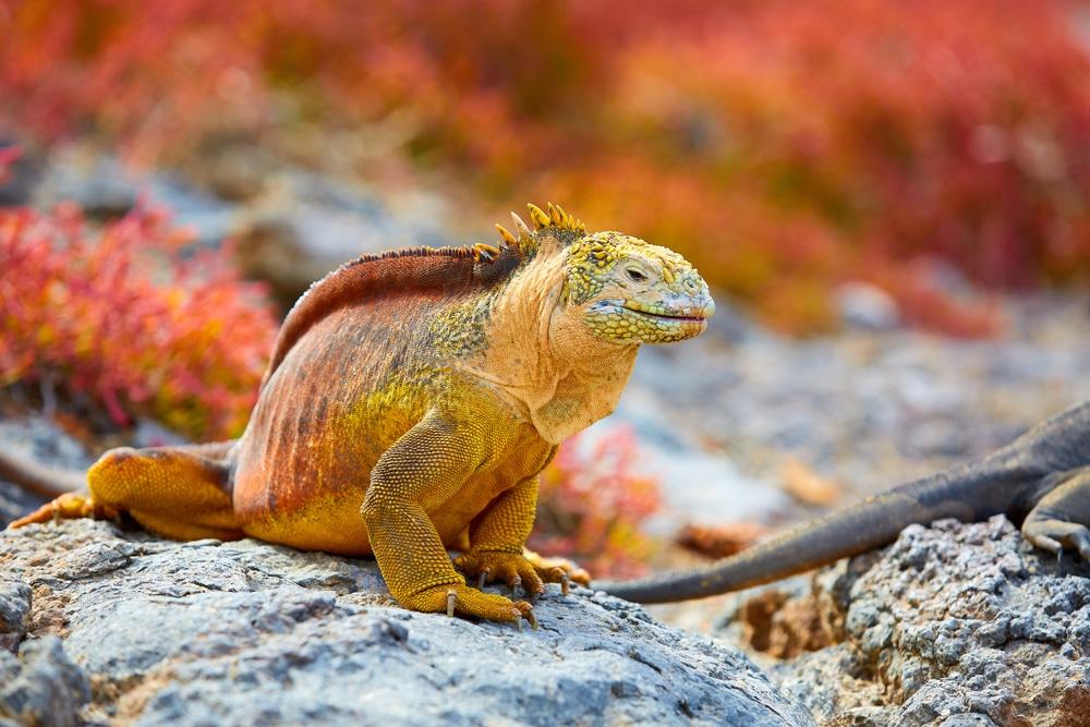 Las Islas Galápagos son famosas por su biodiversidad