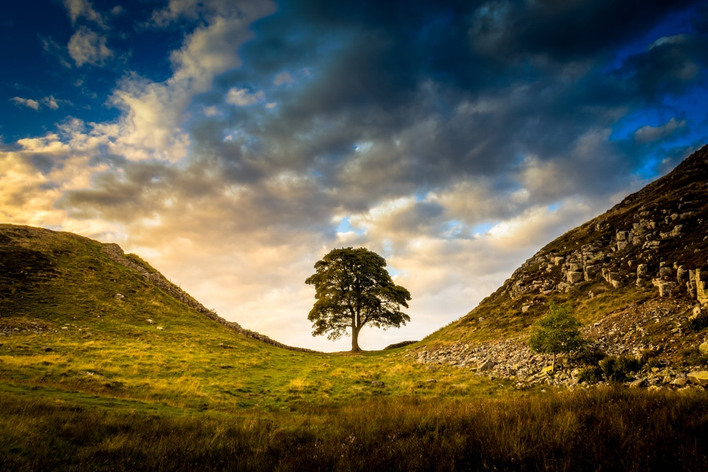 Sycamore Gap is one of the best hikes in Northumberland National Park