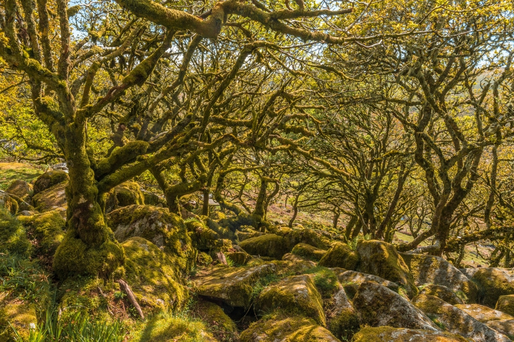 Fairytale landscape at Wistman's Wood: natural wonders in the UK