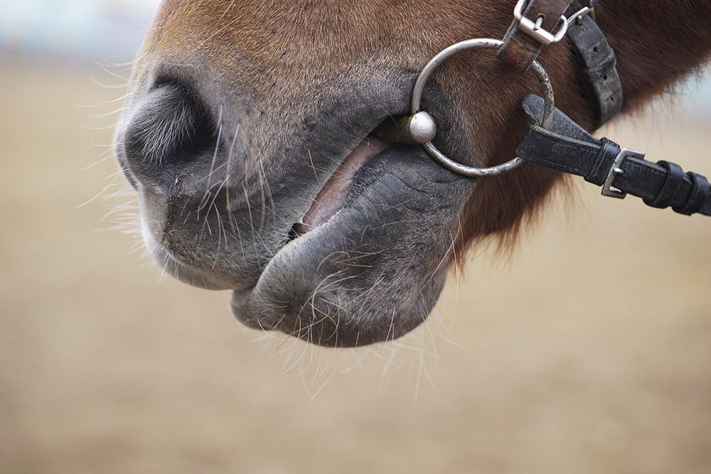 Kia has chosen to quit horse riding