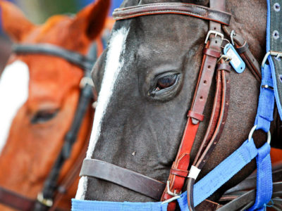 Hanging up my hat: why I've chosen to quit horse riding