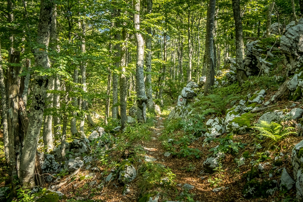 Entrering the forest for the first time on Highlander Velebit