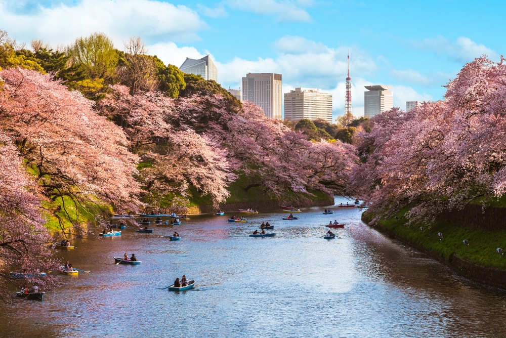 Tokyo city during the blossom