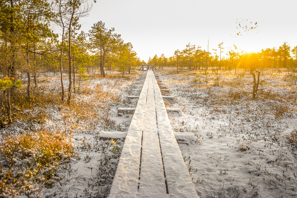 Frozen boardwalks in Latvia