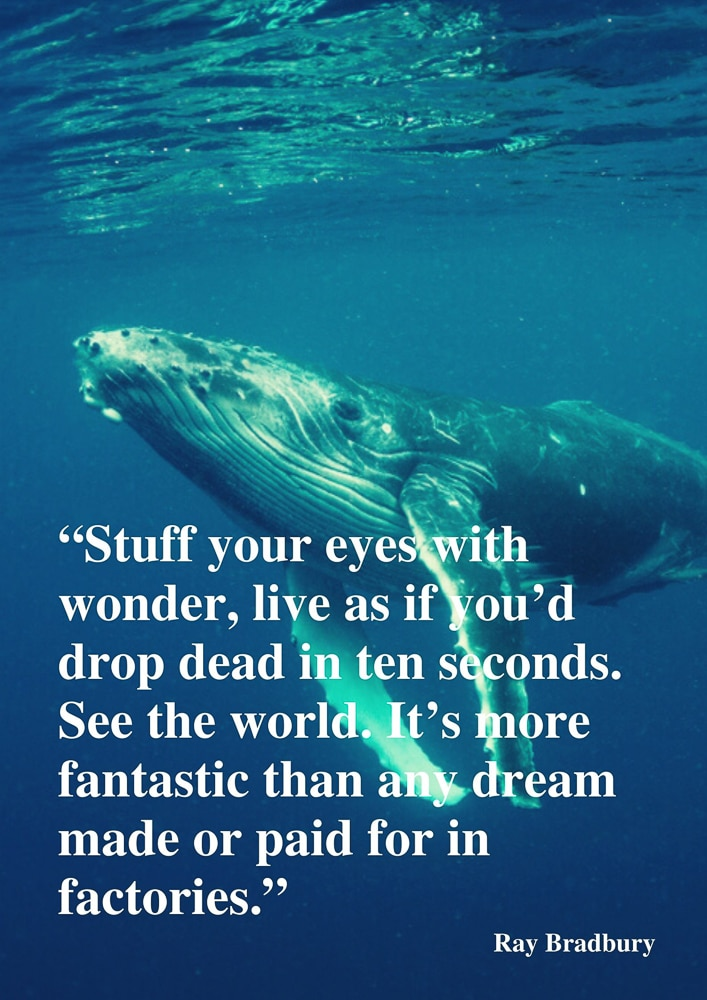 See the world quote by Ray Bradbury