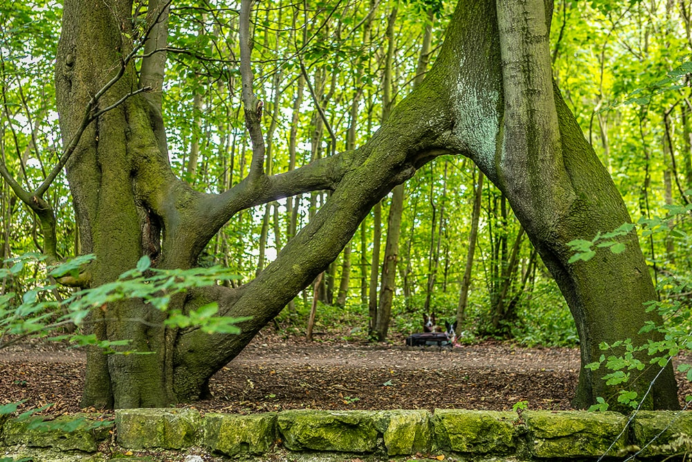 Britain's best trees: Nellie's tree has become a popular spot for marriage proposals