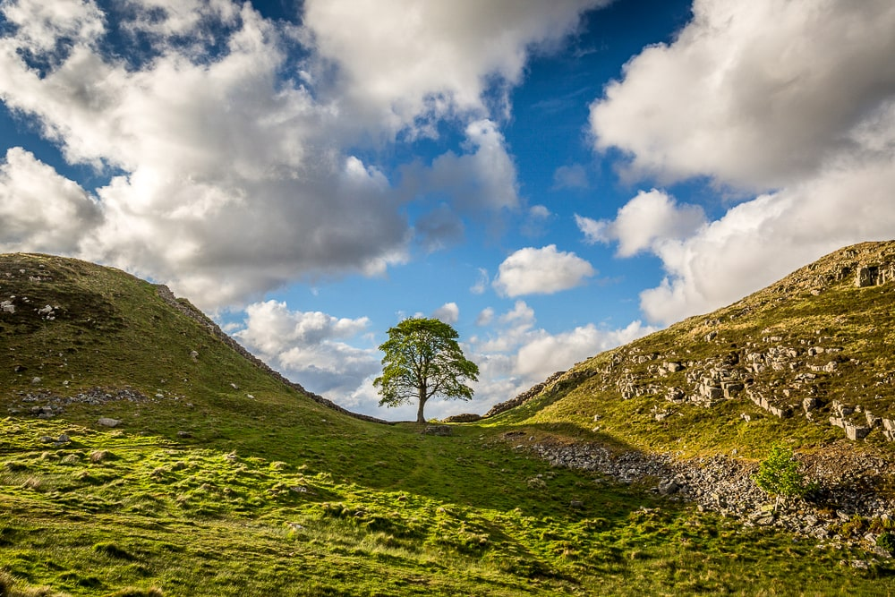 The much photographed Sycamore Gap Tree is one of the best trees in Britain