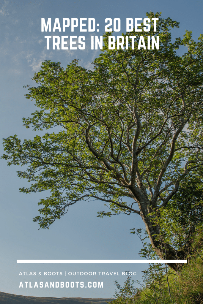 pin: best trees in britain