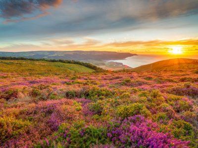 Porlock Bay and heather in Exmoor