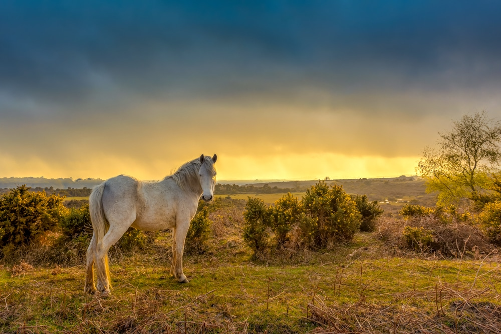 best hikes in New Forest national park lead image
