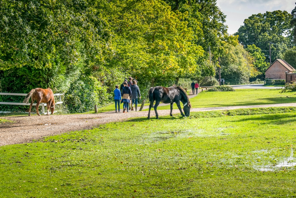 Ponies grazing in Brockenhurst home to one of the best hikes in New Forest national park