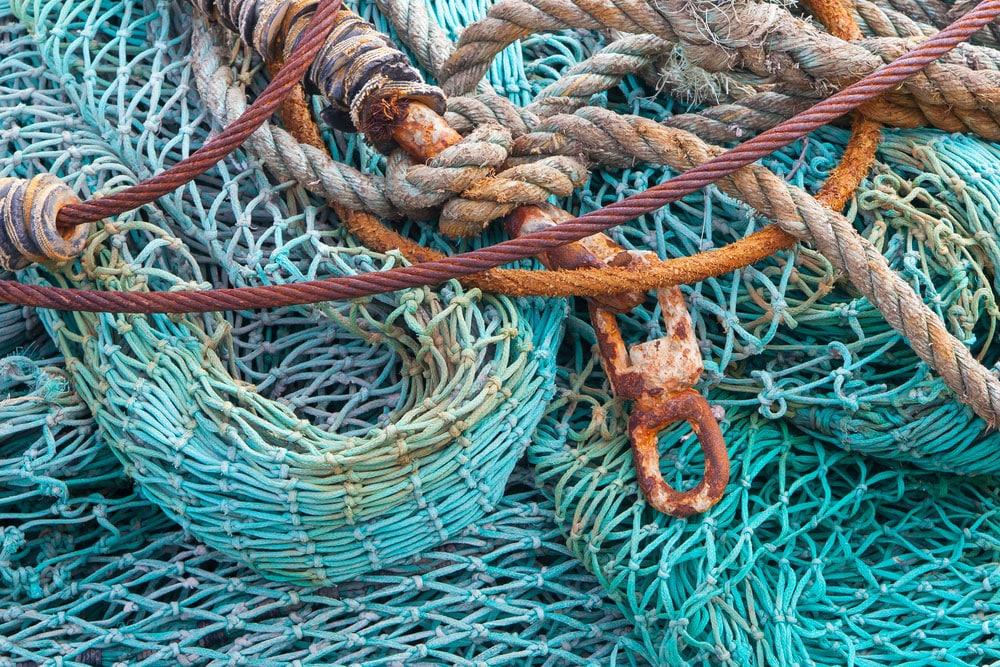 eating fish: blue net
