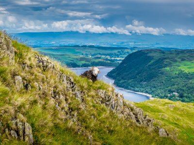 A sheep looks at the camera during the Coast to Coast Walk